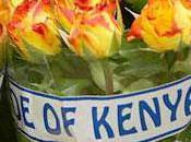 Kenya Près d'un milliard dollars perte exportations fleurs
