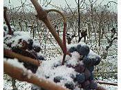 news: vigne froid pieds!!!