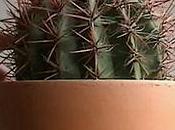 Cactus music Sting Boogie.