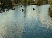 aujourd'hui j'ai couru dans bois Vincennes