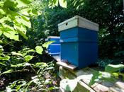 Europe vers jurisprudence commercialisation miel contaminé