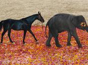 Découvrez making-of campagne Orange Rose indien d'Hermès