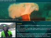 Découverte fonds marins Saint-Pierre Miquelon