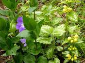 Quelques couleurs plus jardin pour vous souhaiter à...