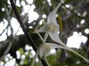 Nouvelle Calédonie mont Panier plantes carnivores