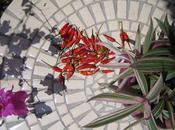 Faites-vous remarquer avec table forgé mosaïque cuisine extérieure haut gamme