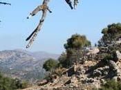 Retour crete, royaume dieux bergers