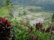 Bali: dieux domicile....