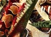 Mega Python Gatoroid