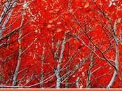 Fonds d'écran d'automne collection superbes photos