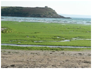 algues vertes font papier