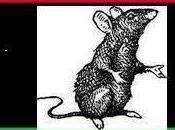 Libye Chaud devant Benghazi soulève contre le….CNT