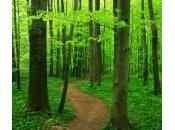 Découvrez miracles Chlorophylle