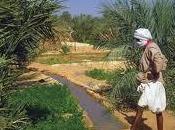 Irriguer palmier dattier