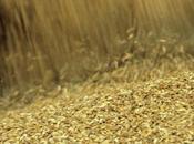 Russie exporte 18,6 millions tonnes céréales mois