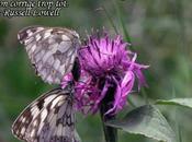 Parole Papillons Marbré Paon jour