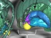 NEURO: striatum ventral, pour rester motivé, motivé Inserm PLoS Biology