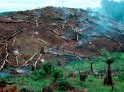 3.000 ans, l'Homme pratiquait déjà déforestation