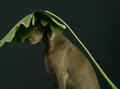 photographe chien !!!!