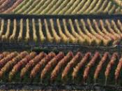 climats vignoble bourgogne candidats patrimoine mondial l'Unesco