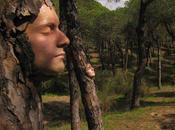 Visage l'arbre