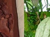 Cake Liqueur Cacao, Demerara Vanille Maurice