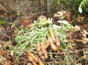 Jardinage comment bien entretenir compost