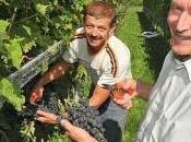 Comment récolter raisins