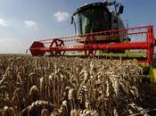 flambée cours céréales éleveurs sous pression