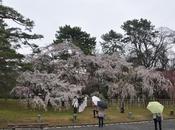 [Voyage Japon] Jour Kyoto