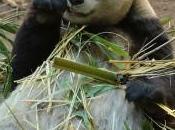 WWF, climat, conflit d'intérêts délit d'initié
