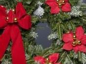 Zoom poinsettia, l'étoile Noel