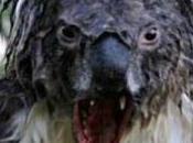 Australie première ministre garde population contre invasion zombies