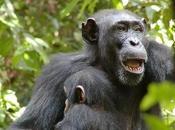 Manifeste pour grands singes nature