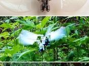 Dragonfly drone espion financé l'US Force