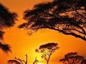 L'Afrique, croissance recul