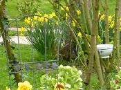 jaune jardin...