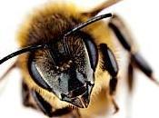 buzz prévenir gérer