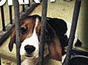 Sauvez chiens laboratoire vivisection
