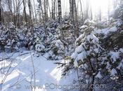 c'est beau l'hiver!