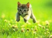 vais ouvrir blog photos bébés chats