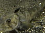 poisson sang transparent présenté l'aquarium Tokyo