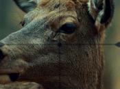 critiques// Hannibal Saison Episode