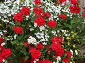 C'est printemps, fleurissez votre balcon