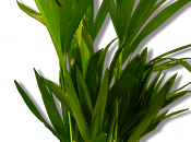 plantes cyborgs arrivent