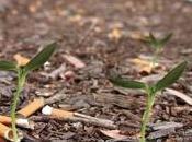 Insolite mégots écolos pour faire pousser fleurs