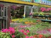 marché fleurs Hongqiao