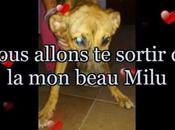 pour Milu chien Espagne, martyrisé, battu, pendu