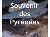 vraie place l'ours dans Pyrénées Museum