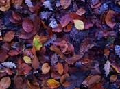 Couleurs d'automne déco